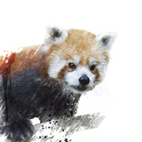 Red Panda Watercolor Láminas por  SunnyS