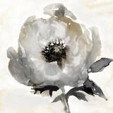 Tranquil Floral II Art par Tania Bello