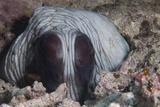An Inquisitive Octopus in a Fijian Reef Fotoprint van Stocktrek Images,