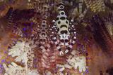 A Pair of Colorful Coleman Shrimp Fotografisk tryk af Stocktrek Images,