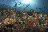 Diver Looks on at Sponges, Soft Corals and Crinoids in a Colorful Komodo Seascape Lámina fotográfica por Stocktrek Images,