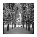 Jardin Luxembourg, Paris. Trees, Chairs Photographic Print by Henri Silberman