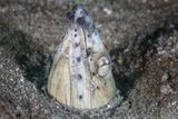 A Tiny Cleaner Shrimp Removes Parasites from a Black-Finned Snake Eel Fotografisk tryk af Stocktrek Images,