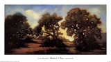 Shadows and Trees Prints by Lynne Windsor