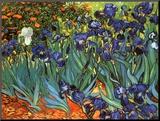 Irises, Saint-Remy, ca. 1889 Monteret tryk af Vincent van Gogh