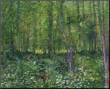 Trees and Undergrowth, c.1887 Lámina montada en tabla por Vincent van Gogh