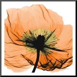 Poppy Orange Kunst op hout van Albert Koetsier