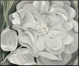 The White Calico Flower, c.1931 Mounted Print by Georgia O'Keeffe