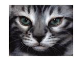 Silver Bengal Cat Stampe di Sarah Stribbling