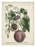 Exotic Weinmann Botanical IV ジクレープリント : ウェインマン