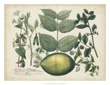 Exotic Weinmann Botanical II Lámina giclée por  Weinmann