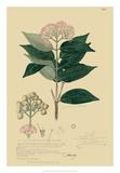 Descubes Tropical Botanical I Giclée-vedos tekijänä A. Descubes