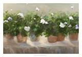 White Geraniums Poster af Sheila Finch