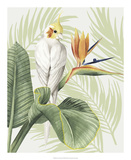 Avian Paradise II Art par Grace Popp