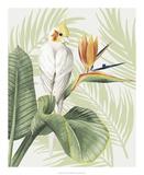 Avian Paradise II Konst av Grace Popp