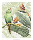 Avian Paradise IV Láminas por Grace Popp