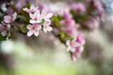 Spring Blossoms III Fotografie-Druck von Beth Wold