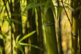 Bamboo Afternoon I Impressão fotográfica por Rita Crane