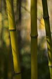 Bamboo Afternoon VIII Impressão fotográfica por Rita Crane