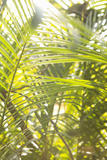 Palm Fonds II Photographic Print by Karyn Millet