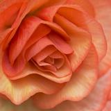 Orange Ruffles III Impressão fotográfica por Rita Crane
