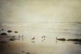 Gulls on a Beach Impressão fotográfica por Roberta Murray
