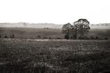 Early Morning Mist I Valokuvavedos tekijänä Alan Hausenflock