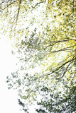 Trees II Impressão fotográfica por Karyn Millet