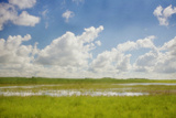 Prairie Slough in Summer Photographic Print by Roberta Murray