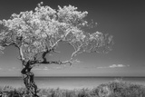 Lone Tree I Photographic Print by Kathy Mahan