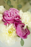 Bouquet of Peonies Photographic Print by Karyn Millet