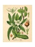 Botanical I Poster by N. Harbick