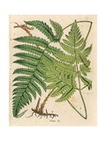 Botanical Ferns I Prints by N. Harbick
