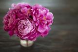 Vintage Pink Peony Impressão fotográfica por Karyn Millet