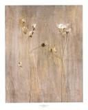 Vanilla Bloom II Posters by Peter Kuttner