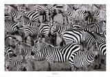 Zebras Abstraction Prints by Jorge Llovet