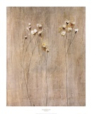 Vanilla Bloom I Prints by Peter Kuttner