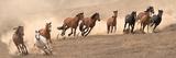 Running Wild Photographic Print by Sally Linden