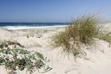 Sand Dunes, Dune Vegetation, Portuguese Atlantic Coast, Praia D'El Rey, Province Obidos, Portugal Photographic Print by Axel Schmies