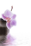 Orchid with Black Vase Photographic Print by Andrea Haase