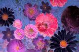 Colorful Floral Design Stampa fotografica di Alaya Gadeh