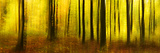 Deciduous Forest in Full Autumn Colours, Abstract Study [M Fotografie-Druck von Andreas Vitting
