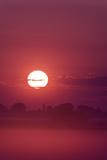 Austria, Burgenland, Neusiedlersee (Lake), Fertš National Park, Sunrise Impressão fotográfica por Rainer Mirau