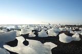 Ice, Icebergs, Black Lava Beach, Glacier Lagoon, Jškulsarlon, South Iceland Reproduction photographique par Julia Wellner