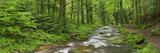 Coarse Brook, Gerold Villagesau, Black Forest, Baden-Baden, Baden-Wurttemberg, Germany Photographic Print by Rainer Mirau