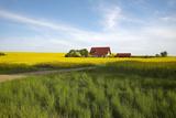 Germany, Mecklenburg-Western Pomerania, Island Usedom, Rape Field, House Photographic Print by Chris Seba