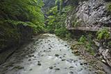 Austria, Vorarlberg, Dornbirn (Village), Rappenlochschlucht (Ravine) (Gulch) Impressão fotográfica por Rainer Mirau