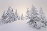 Winter Landscape, Trees, Snow-Covered Series, Nature, Vegetation Fotografie-Druck von Roland T.