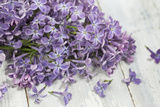 Lilac, Blossoms, Purple, Violet, Spring Photographic Print by Andrea Haase