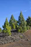 Volcano Landscape in the Nature Reserve Cumbre Vieja, La Palma, Canary Islands, Spain, Europe Photographic Print by Gerhard Wild